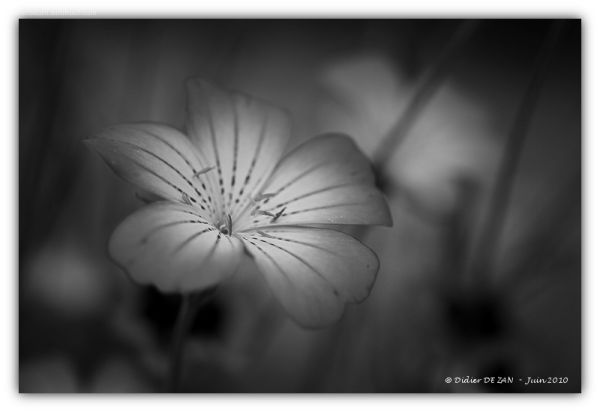 BW Flowers ....