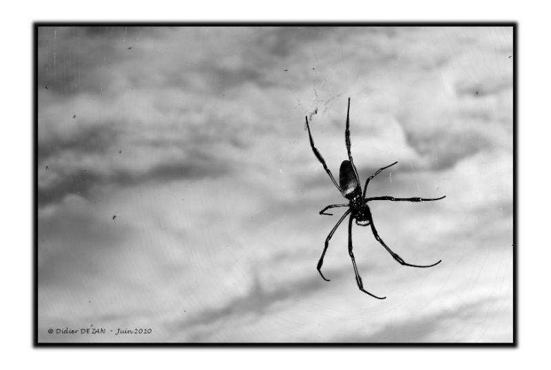 Une  Araignée ....