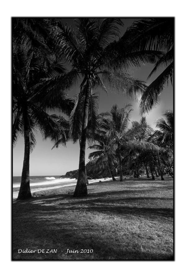 A l'ombre des cocotiers .....