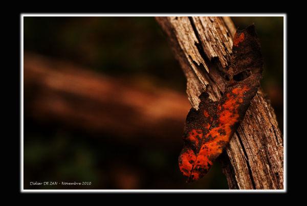 Les feuilles mortes ......