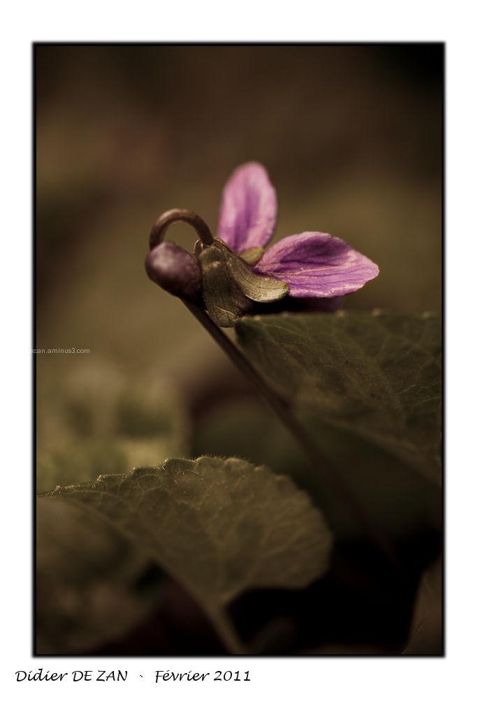 Violette .....