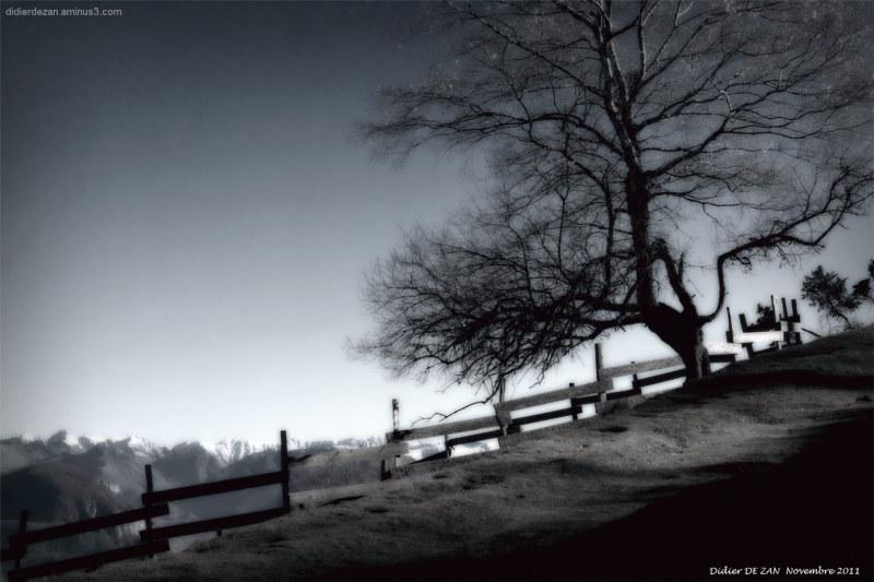 Un arbre, Une barrière .....