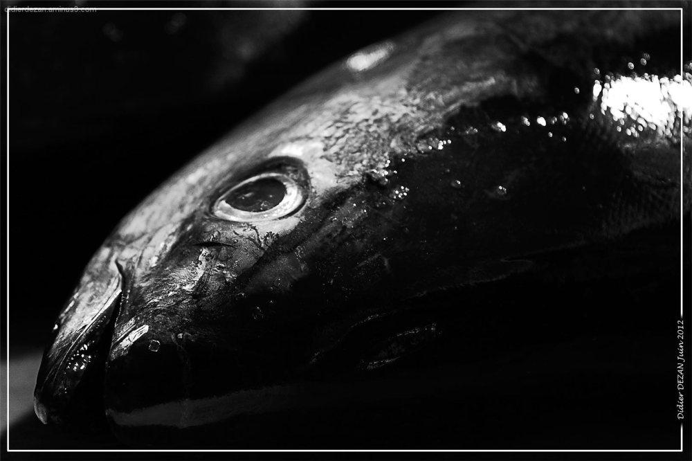BLack Fish...