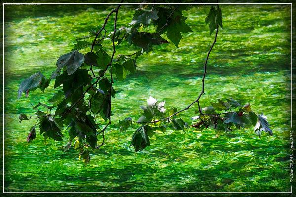 L'eau de Fontaine de Vaucluse ....