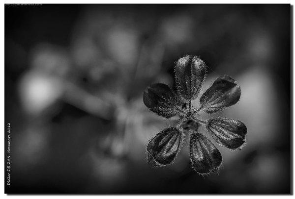 A Flower ? .......