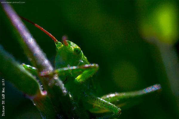 Grasshopper .....