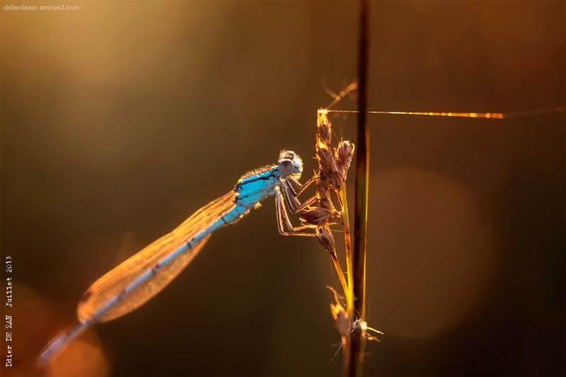 Dragonfly ....