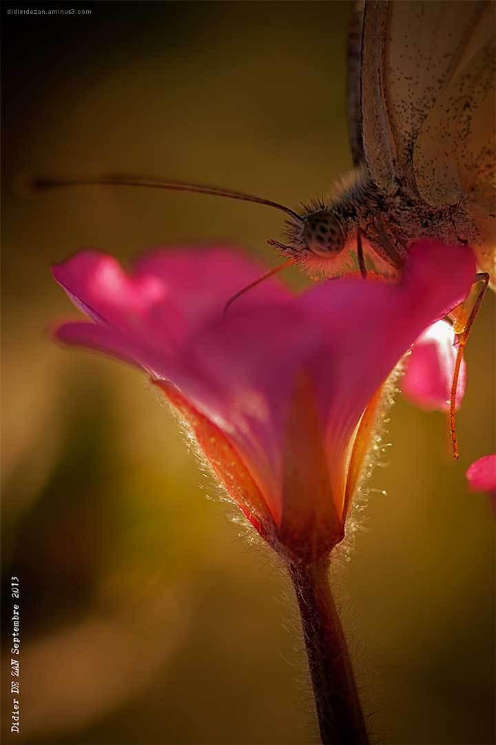 FlowerButterfly .....