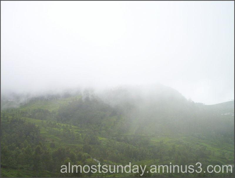 Vernal woods & the mist