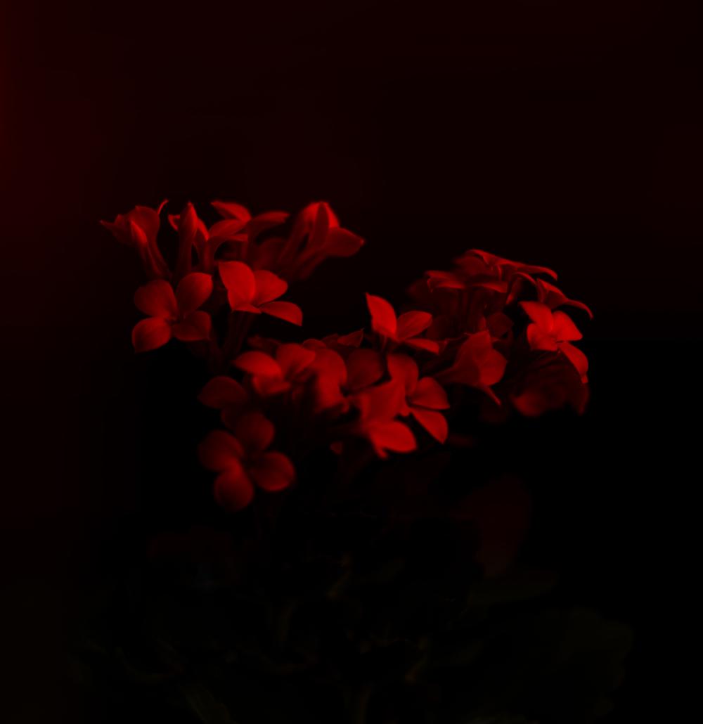 Flower in the darkness