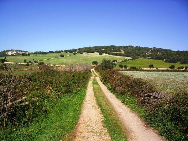 Paisaje del campo de Menorca en primavera