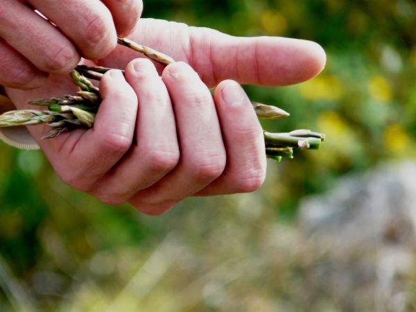 Primer plano de mano con espárragos trigueros
