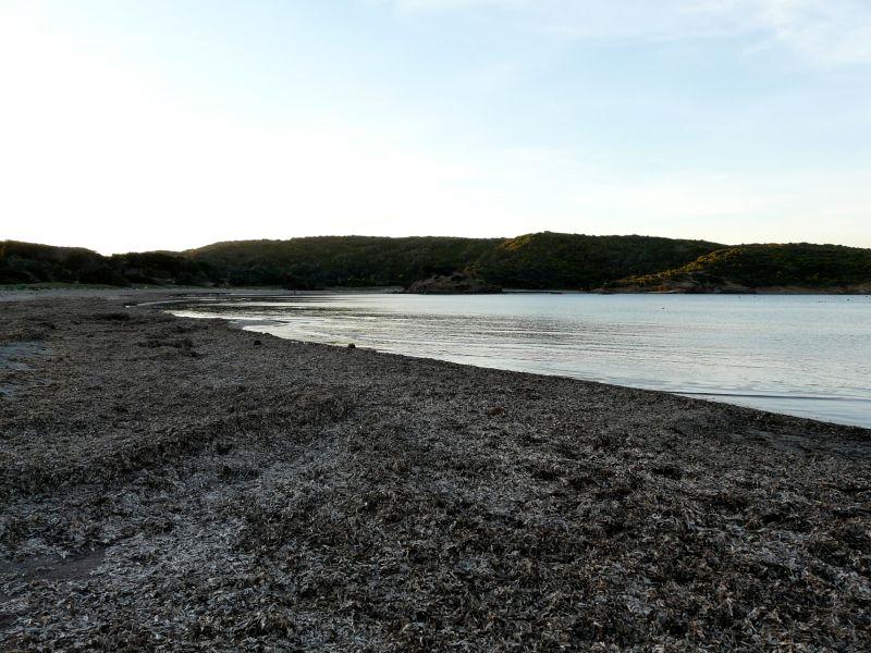 Playa de Es Grao llena de algas en menorca