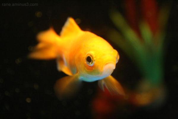 Here.. fishy.. fishy..