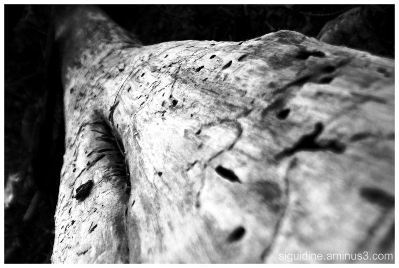 wood bois
