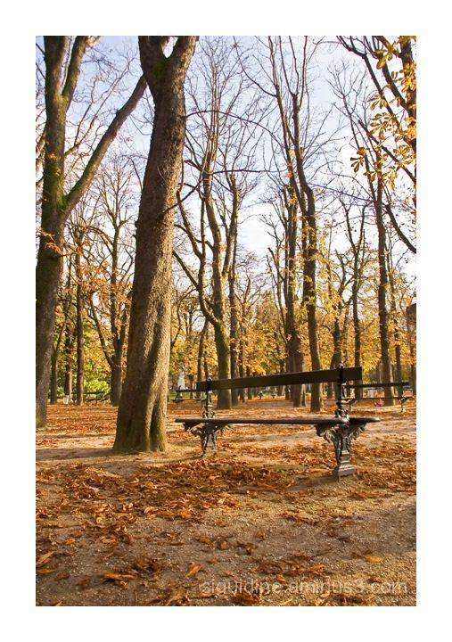 Bench in Luxembourg gardens - Paris