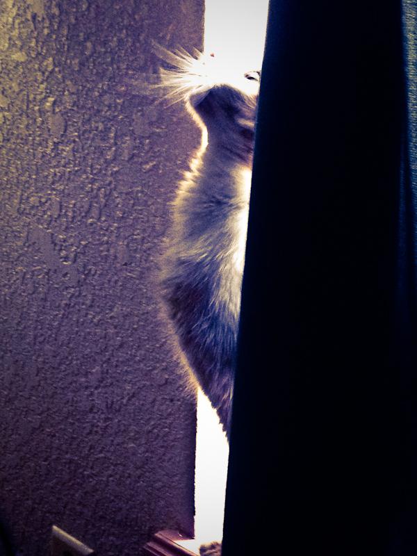 Piglet in a Window
