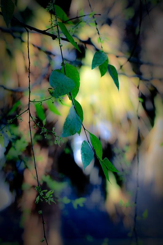 Orton Leaves