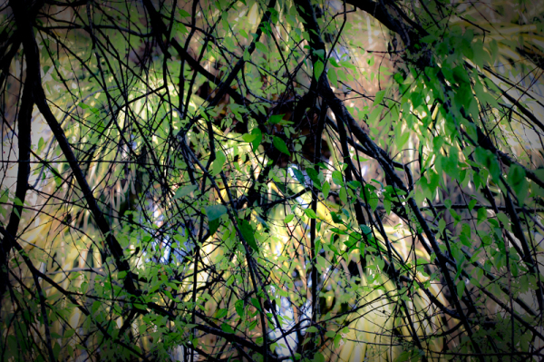Orton Tree