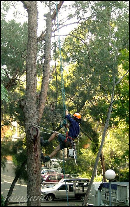 tree cutting chainsaw