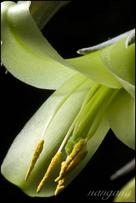 green flower macro