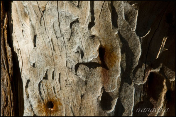 wood bark damaged ridges