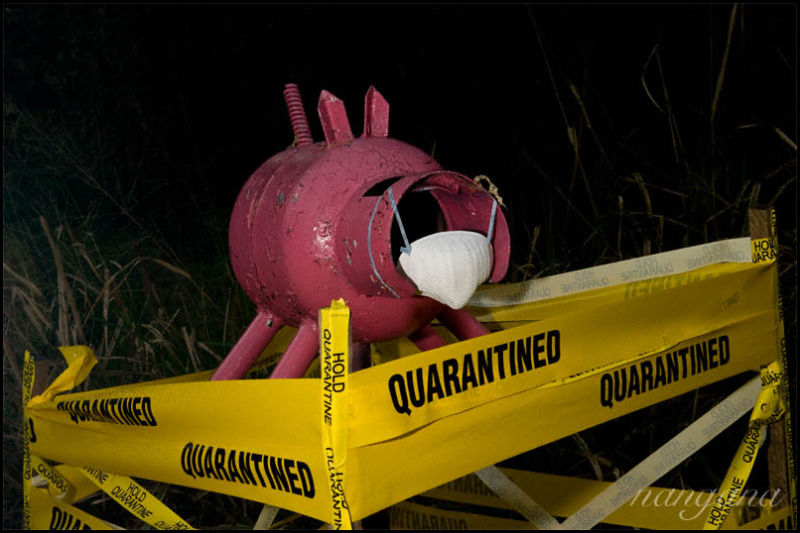 mailbox pig quarantined swine flu