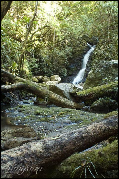 fallen logs and waterfall Lamington Binna Burra