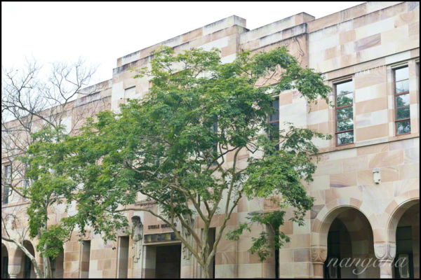 canopy and sandstone