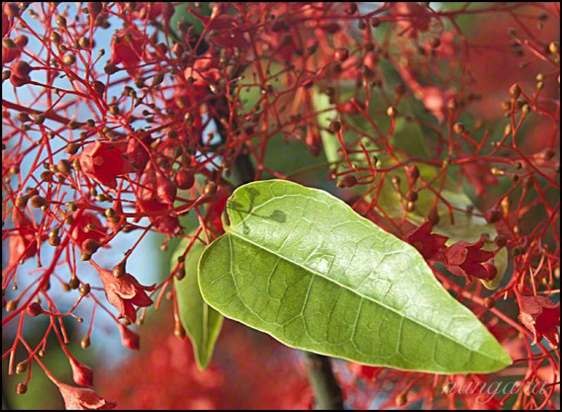 green leaf on red