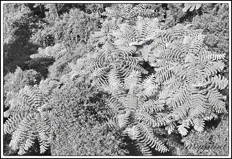 palm tree ferns