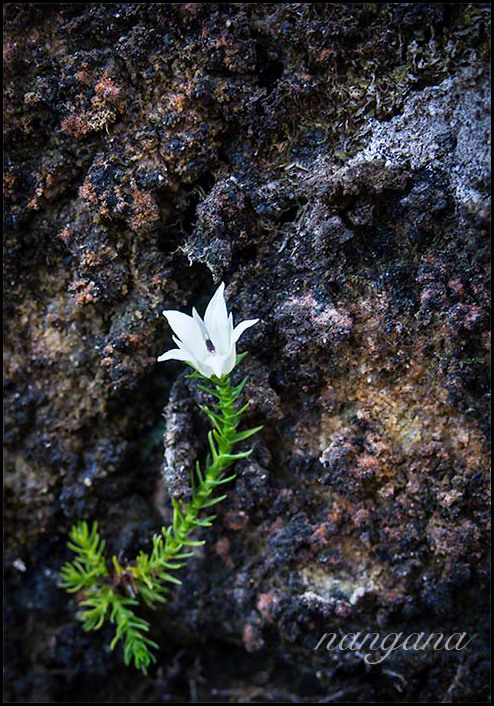 flower on rock