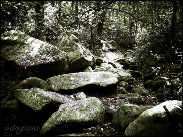 dark creek