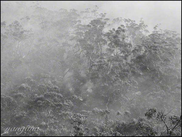 kedumba bushfire - backburn