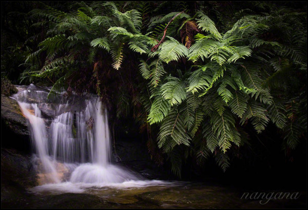 small waterfall with ferns