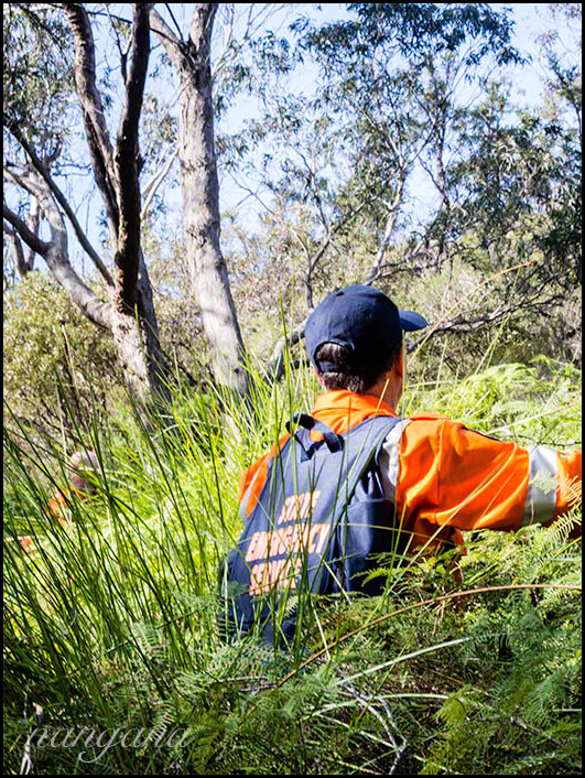 volunteers looking for a missing man in thick bush