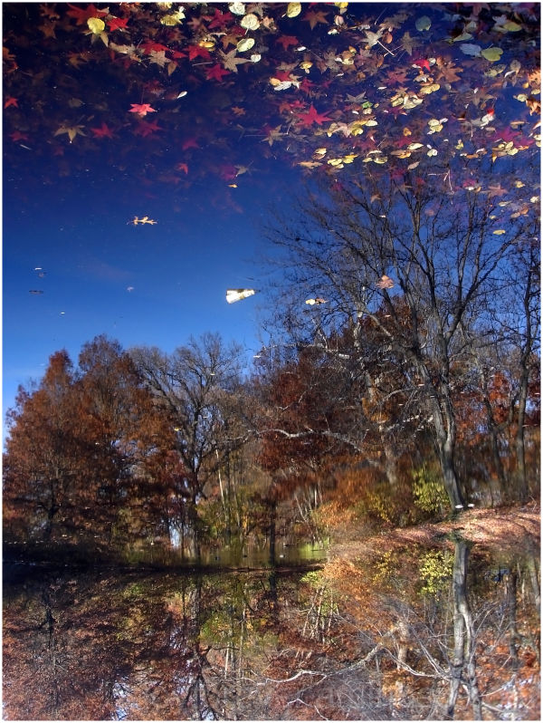 Reflection of trees in fall