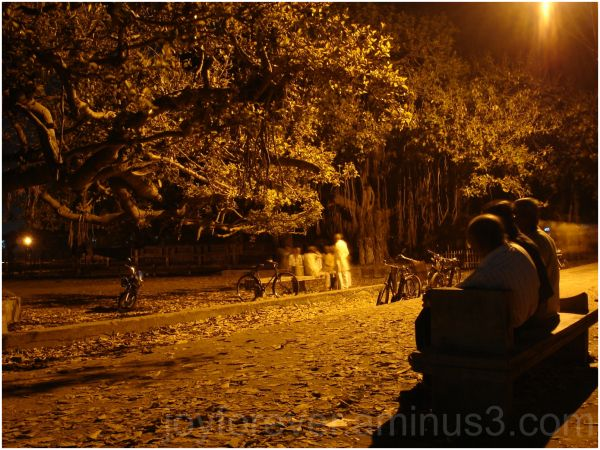 People chitchat under tree