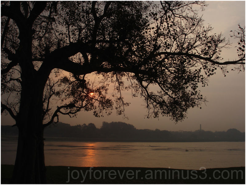 sunrise tree river Silhouette Hooghly