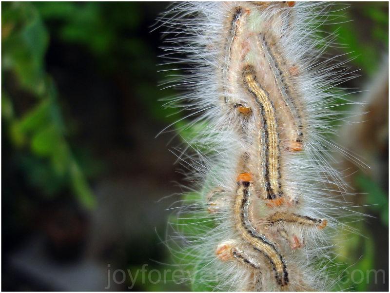 Catterpillar pillar