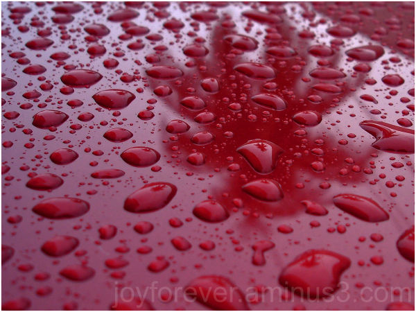 drops rain cherry red car