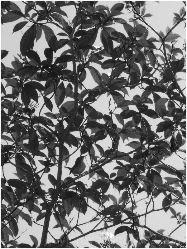 leaves black & white bird