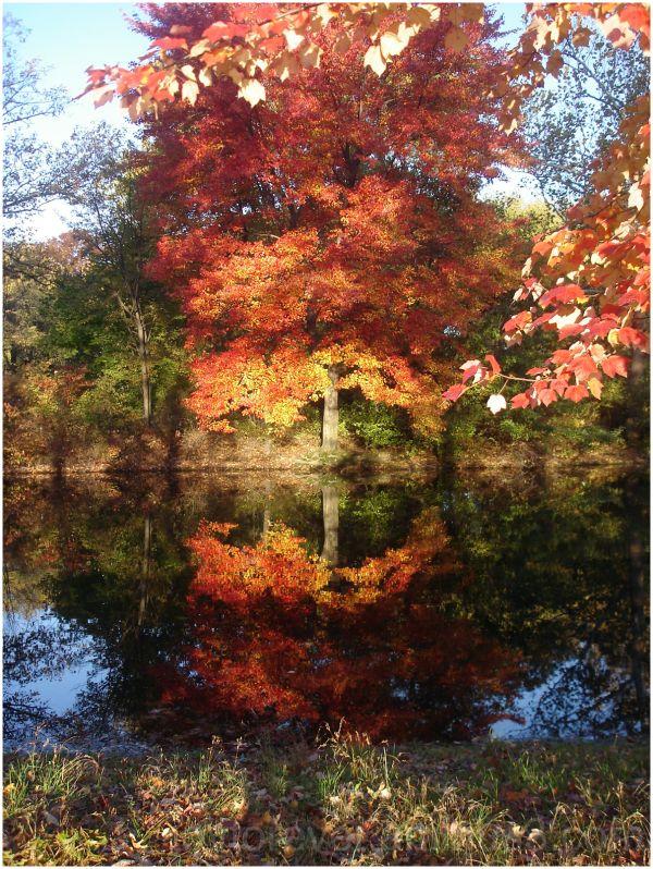 Fall foliage reflection