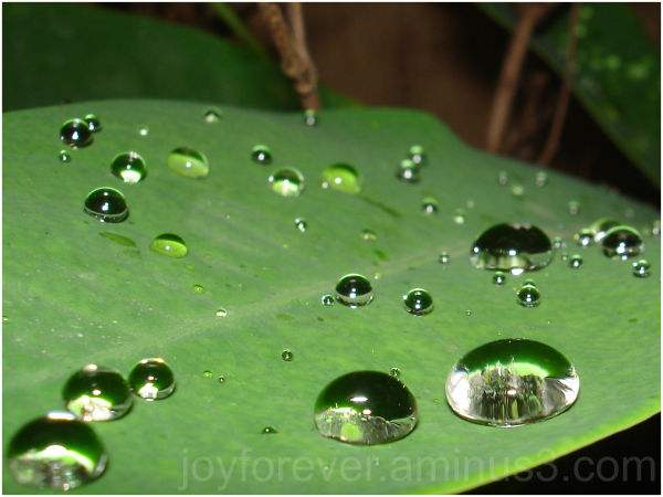 water drop macro leaf