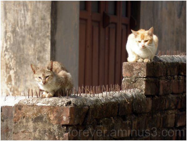 cats wall nails