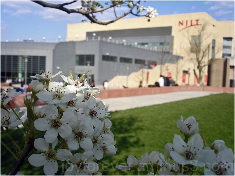 NJIT Newark Apple Blossom spring