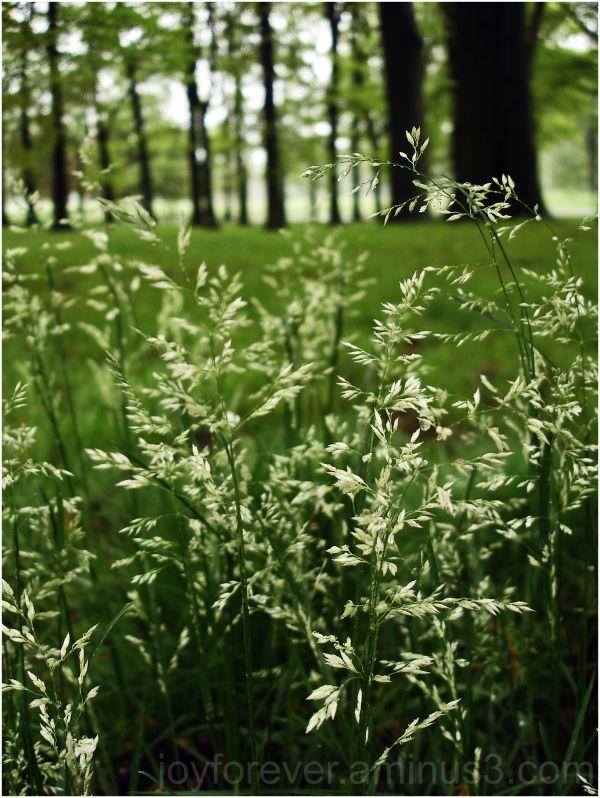 grass flowers green spring