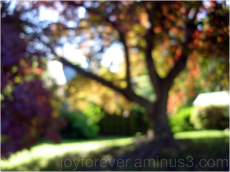 bokeh tree garden spring blur impressionism