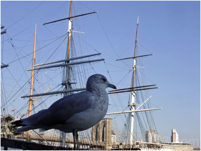 South Street Seaport seagull ship