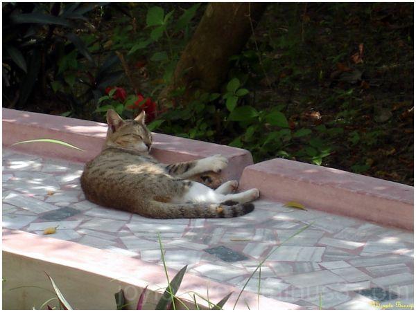 cat sleeping napping